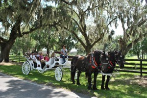 Doc and Doc On a Carriage Tour