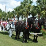Duke and Doc on Ocala Carriage Tour