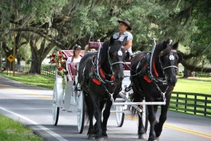 Carriage Tour Guide Shares History of Ocala
