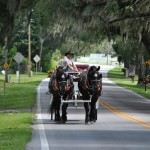 Carriage Tour Stolls Along Ocala Horse Country