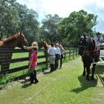 Ocala Carriage Tour Stops To Pet Horses