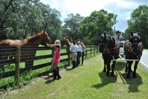 Ocala Carriage Tour Gets to pet horses