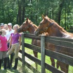 Ocala horse Tour Getting Kisses From Horse