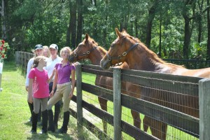 Ocala Tour Getting Kisses From Horse