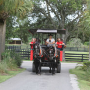 Ocala Farm Tour Group of 27